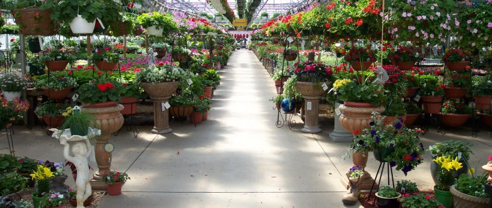Pahl's Main Greenhouse