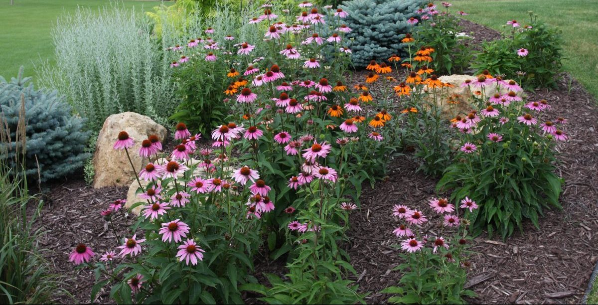 Layering Your Landscape Using Trees Shrubs And Perennials