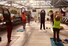Yoga in the Greenhouse