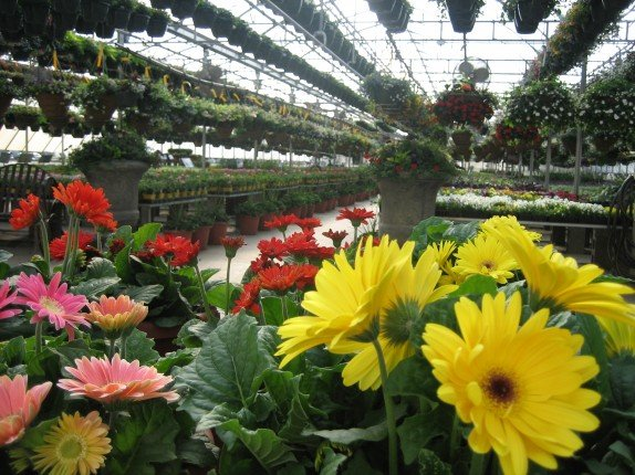 Pahl's Greenhouse